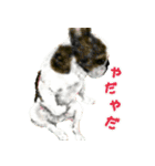 Re:Start 元保護犬スタンプ(個別スタンプ:22)