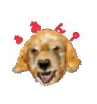 Re:Start 元保護犬スタンプ(個別スタンプ:23)
