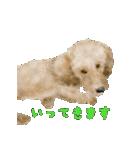 Re:Start 元保護犬スタンプ(個別スタンプ:25)