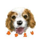 Re:Start 元保護犬スタンプ(個別スタンプ:26)