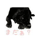 Re:Start 元保護犬スタンプ(個別スタンプ:27)