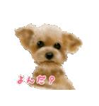 Re:Start 元保護犬スタンプ(個別スタンプ:28)