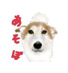 Re:Start 元保護犬スタンプ(個別スタンプ:29)
