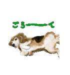 Re:Start 元保護犬スタンプ(個別スタンプ:30)