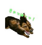 Re:Start 元保護犬スタンプ(個別スタンプ:32)