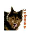 Re:Start 元保護犬スタンプ(個別スタンプ:33)