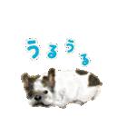 Re:Start 元保護犬スタンプ(個別スタンプ:35)