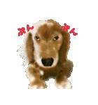 Re:Start 元保護犬スタンプ(個別スタンプ:36)