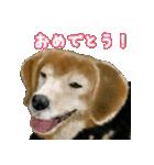 Re:Start 元保護犬スタンプ(個別スタンプ:37)