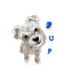 Re:Start 元保護犬スタンプ(個別スタンプ:39)