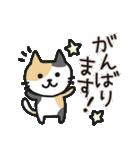 丁寧語なネコちゃま(個別スタンプ:24)