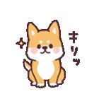 ころころ柴犬(個別スタンプ:10)