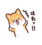 ころころ柴犬(個別スタンプ:17)