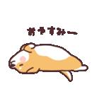 ころころ柴犬(個別スタンプ:19)