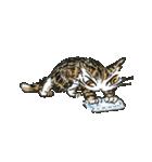 TVアニメ「猫のダヤン」(個別スタンプ:26)