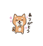 しばいぬさん 日常編 vol.1(個別スタンプ:04)
