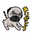 パグっち(個別スタンプ:01)