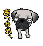 パグっち(個別スタンプ:05)