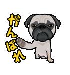 パグっち(個別スタンプ:40)