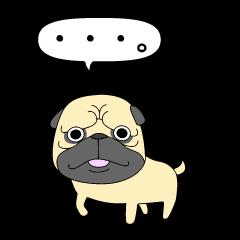 パグ犬のゴエモン