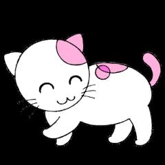 福猫の桜ちゃん