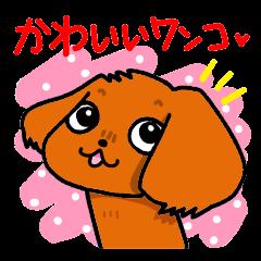 かわいいワンコ♥(キャバリア・ルビー)