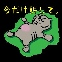 キジトラ猫わがままリリィちゃん