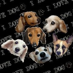 リアルわんこ~リアルな犬たち~