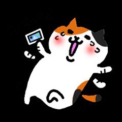 猫シリーズ⑤三毛にゃん、基本編