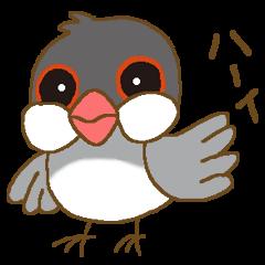 ハーイ!文鳥です