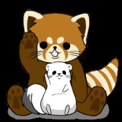 レッサーパンダの茶太郎とオコジョの小太郎