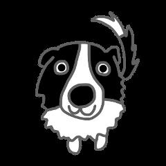忠犬ボーダーコリー、時々ヒツジ。