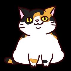 三毛猫のしょーちゃん