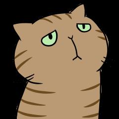 キジトラ猫の日常