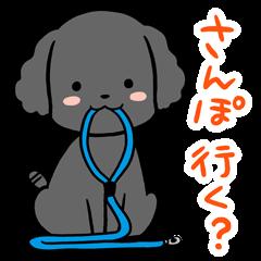 黒トイプードル「こんぶ」の日常