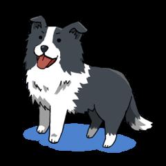 ボーダーコリー犬スタンプ