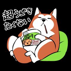 ゆる秋田犬