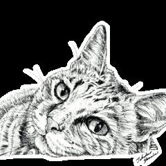 Cats & Dogs 1 - 山田貴裕 - 猫&犬 第1弾