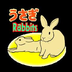 うちの家ウサギさんたち