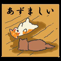 北海道の柴犬とコーギー