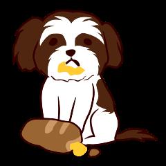 シーズー犬の日常