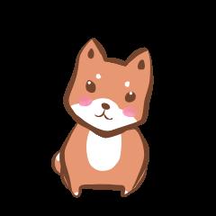 柴犬トムさん