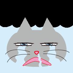 キラキラ目の猫