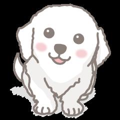 白い犬(グレートピレニーズの子犬)