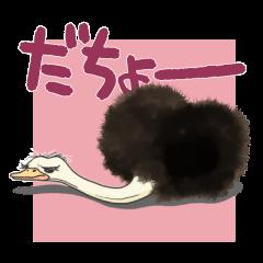 駝鳥です。