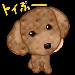 トイぷー(トイプー)
