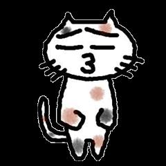 三毛猫の猫美