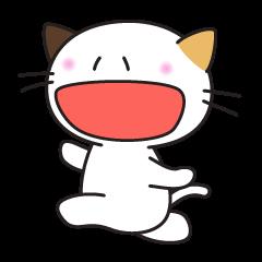 三毛猫みっけ