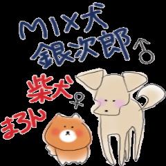 MIX 犬銀次郎  柴犬まろん