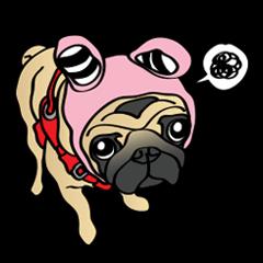 Bad dog Chloe's pug life